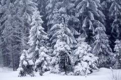 La neige a couvert le paysage d'hiver Image libre de droits