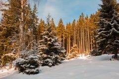 La neige a couvert le paysage dans la forêt aux montagnes parc national, Allemagne de Harz photos stock