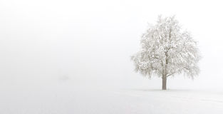 La neige a couvert le poirier photographie stock libre de droits
