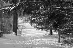 La neige a couvert le sentier de randonnée Images stock