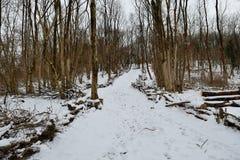 La neige a couvert le sentier piéton Photographie stock libre de droits