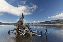 La neige a couvert le tronçon d'arbre sur le lac photo libre de droits