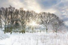 La neige a couvert les arbres ruraux de lever de soleil de début de la matinée Photos stock