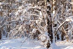 La neige a couvert les arbres sans feuilles dans la forêt d'hiver Image libre de droits
