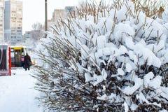 La neige a couvert les buissons, fond des arbres pour une double exposition, beaucoup de branches, branches dans la neige, la nei images libres de droits