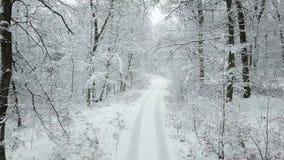 La neige a couvert la route dans une forêt banque de vidéos