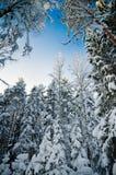La neige d'hiver a couvert des arbres contre le ciel bleu Photographie stock libre de droits
