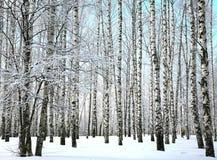 La neige d'hiver a couvert des branches de bouleau sur le ciel bleu Image libre de droits