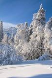La neige d'hiver a couvert la forêt Photo stock
