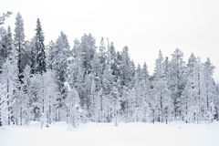 La neige de bomenl de taiga de Besneeuwde a couvert des arbres de Taiga image stock