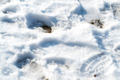 La neige de fonte avec l'humain chausse des empreintes de pas Photos libres de droits