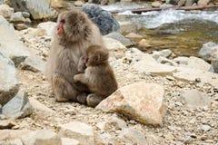 La neige de parent et d'enfant monkey en Jigokudani Yaen-Koen, Japon Image stock
