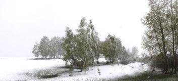 La neige de ressort tombe dans le verger photos libres de droits