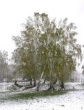 La neige de ressort tombe dans le verger photographie stock libre de droits