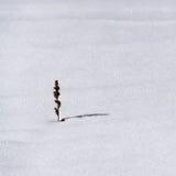 La neige est herbe sèche. Photographie stock libre de droits