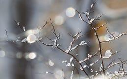 La neige et la glace ont couvert des branches d'arbre Photographie stock libre de droits