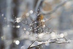 La neige et la glace ont couvert des branches d'arbre Photos libres de droits