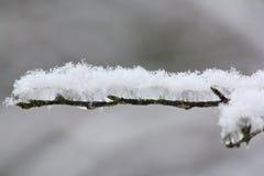 La neige et la glace ont couvert la branche Images stock