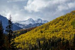 La neige fait une pointe des trembles d'or photos stock