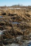La neige fond et l'eau accumulée de fonte forme un marais image libre de droits