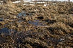 La neige fond et l'eau accumulée de fonte forme un marais photos stock