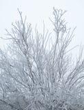 La neige glaciale a couvert l'arbre photographie stock libre de droits