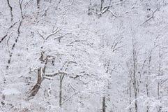 La neige s'est assemblée des arbres Photo libre de droits