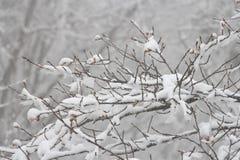 La neige se rapporte à des formes de cristaux de glace qui précipitent de l'atmosphère et du x28 ; habituellement du clouds& x29  Image libre de droits