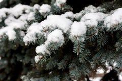 La neige se trouve profondément sur les branches de l'arbre de Noël photo stock