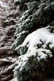 La neige se trouve profondément sur les branches de l'arbre de Noël photos stock