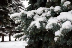 La neige se trouve profondément sur les branches de l'arbre de Noël photographie stock