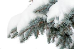 La neige se trouve sur une branche d'un sapin bleu Photographie stock