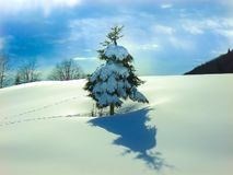 La neige simple a couvert le pin dans la couverture de la neige lisse d'empreintes de pas image libre de droits