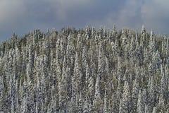 La neige tôt époussette les arbres supérieurs de montagne Photographie stock