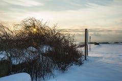 La neige tôt de saison le long des buses aboient photos libres de droits