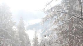 La neige tombe et immédiatement les fontes, écoulements vers le bas des arbres en Himalaya clips vidéos