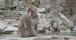 La neige tombe pendant que le singe de neige se repose à côté de l'onsen - source thermale banque de vidéos