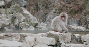 La neige tombe pendant que le singe de neige se repose à côté de l'onsen - source thermale clips vidéos