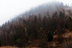 La neige tombe sur les arbres Photos stock
