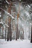 La neige vont vers le bas de la branche dans la forêt Photos stock