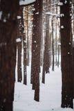 La neige vont vers le bas de la branche dans la forêt Photo stock