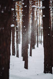La neige vont vers le bas de la branche dans la forêt Image stock