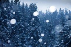 La neve cade in foresta Fotografie Stock