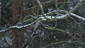 La neve cade sugli alberi