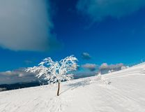 La neve dell'inverno si è rannicchiata albero in montagna Fotografie Stock