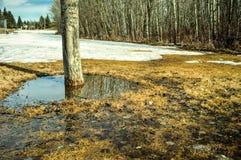 La neve della primavera si scioglie Fotografia Stock