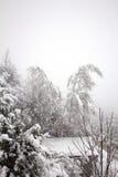 La neve di caduta piega due alberi Fotografia Stock Libera da Diritti