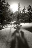 La neve e gli alberi nell'inverno abbelliscono nel Circolo polare artico Fotografia Stock Libera da Diritti