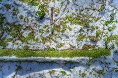 La neve ed il muschio hanno riguardato il terreno Immagini Stock Libere da Diritti