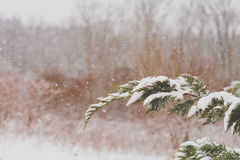 La neve lanuginosa spolvera i rami di alberi fotografia stock libera da diritti
